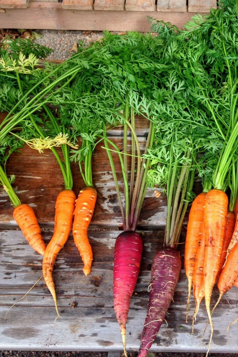 Several carrots on a wooden porch, including orange, red, and purple varieties