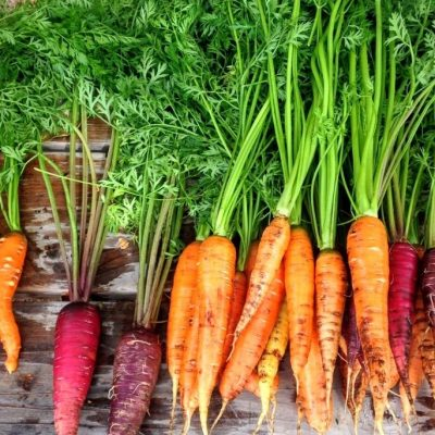 Is a Carrot a Fruit or a Vegetable? A Science Teacher Explains